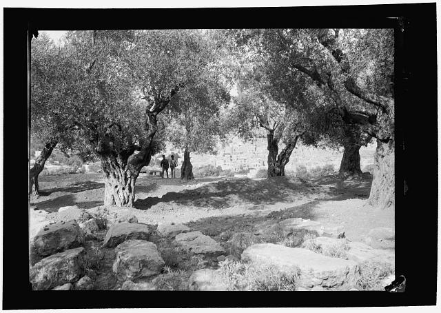 hebron.1929.common.grave